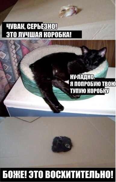 http://cs413919.vk.me/v413919627/143e/Ov_p0wzErzI.jpg