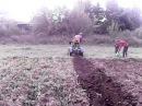 Картофелекопалка для самодельного трактора