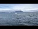 Кит выпрыгнул рядом с лодкой и окатил туристов водой