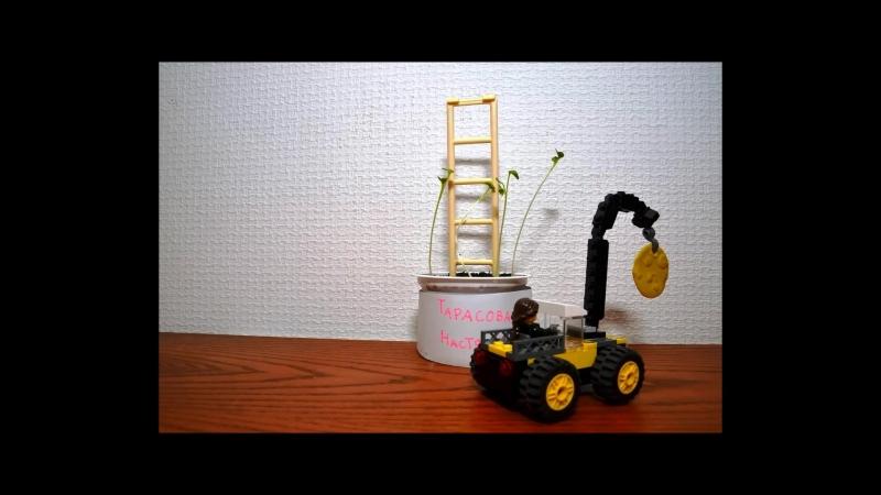 Веселый_огород