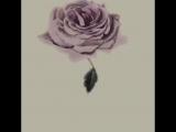 С.Андрияка. Роза (анимация).