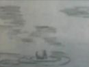 Дубовый Гай Мишины Дельфины