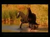 Арабатский конь и божественная музыка .