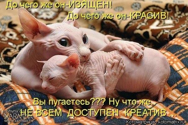 http://cs619817.vk.me/v619817600/14c8f/j2EmMTb6McI.jpg