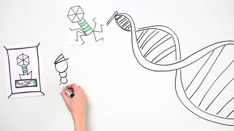 Как работает CRISPR-Cas9. Мульт теория