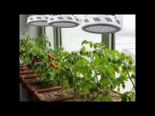 Led Grow Светодиодные фитосветильники, фитолампы, фитопанели (10 спектров) для выращивания, освещения, роста, подсвечивания, досвечивания растений, рассады, цветов, овощей, зелени, травы. Освещение теплиц, оранжерей, гроубоксов, гровбокса, Growbox