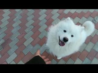 Я удивляюсь когда некоторые люди на улице с ужасом обходят меня стороной увидев собаку. Такие смешные вы)#собакаубийца #людоед