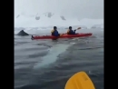 Kayakers had a close encounter of a humpback spyhopping Awesome whale2 astonished video camera by @po 480 X 480 mp4