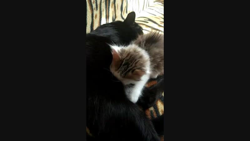 Кот который МАМА-Папа