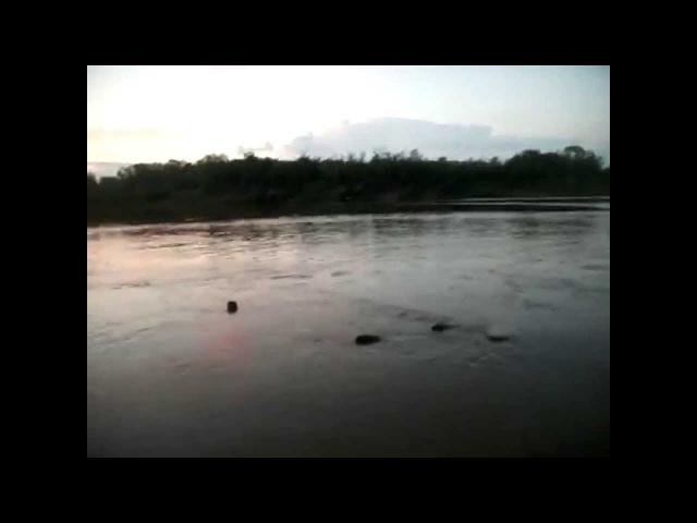Сом на спиннинг на мелководье - сюрприз водяного