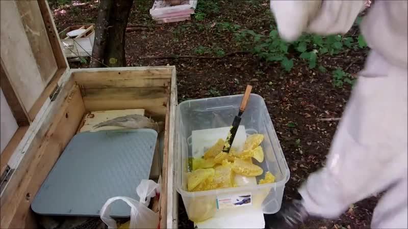 Собираем содовый мед.