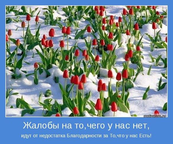 http://cs409521.vk.me/v409521129/2129/sqD0WKt2who.jpg