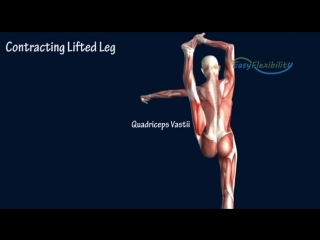 SLs How to Bow and Arrow Cheerleading Muscle Anatomy Cheer EasyFlexibility