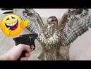 أفضل فيديو مضحك عن الحيوانات 😂| اتحداك ان ل1575