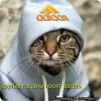 фото котов крутые