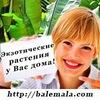 Экзотические комнатные растения Balemala