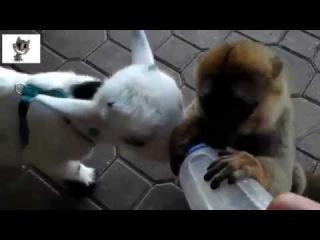 Смешные и милые животные. НОВАЯ КОЛЛЕКЦИЯ 2014 ГОДА