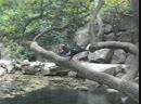 Райский уголок - озёра в парке Воронцовского дворца