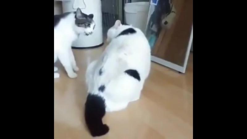 Толстый кот-миротворец