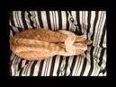 SLEEPING CATS - СПЯЩИЕ КОШКИ