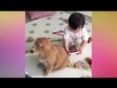 Забавные и милые котята и кошки🤗 Самое тёплое и пушистое видео😁😊
