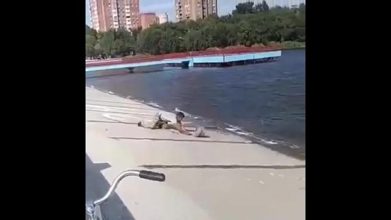 Ловкий карп едва не утянул рыбака в речную пучину