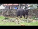 Танцующий слоненок Храм Зуба Будды Шри Ланка