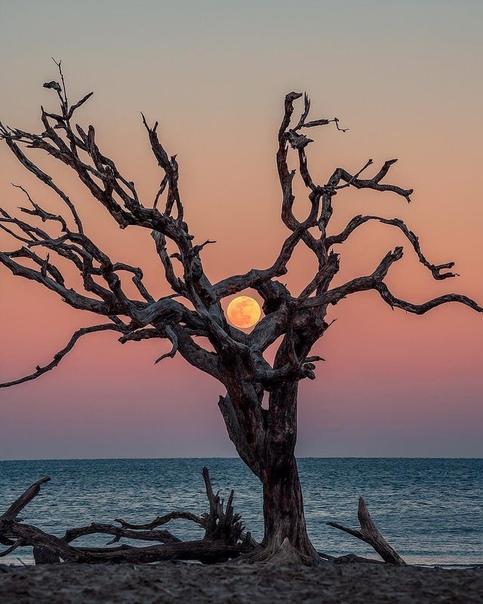 """""""Лунное дерево"""""""