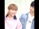 No one and nothing can beat jeon wonwoo in terms of cuteness MQ mp4
