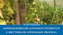 Домодедовские дачники готовятся к фестивалю «Праздник яблока»