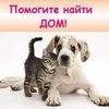 Бездомные животные в добрые руки