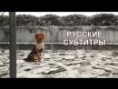 Остров собак - Интервью с актерами | Русские субтитры (WT)