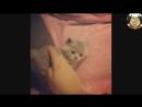 Милые котики3