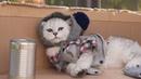 Homeless Cats