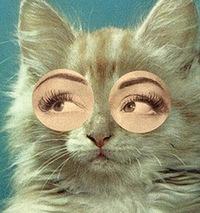 Cat Cunning, 27 января , Казань, id188171574