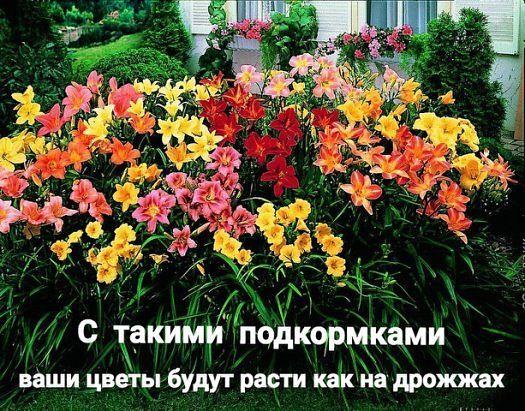 Оказывается, цветы могут расти как на дрожжах и для этого всего навсего