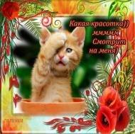 Красавица открытка 390