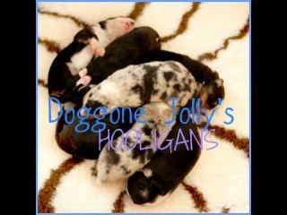 26.9.'14 - ∞ Doggone Jolly's Hooligans.♡ (1week)