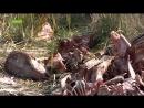 В Абакане кто то устроил скотомогильник в микрорайоне Арбан