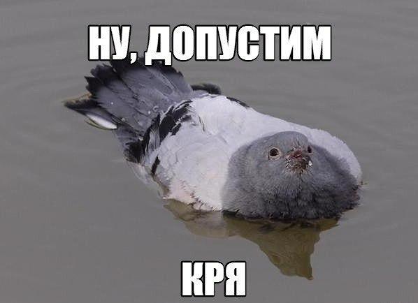 http://cs14108.vk.me/c7006/v7006141/1828b/KYJoFf3fOFg.jpg