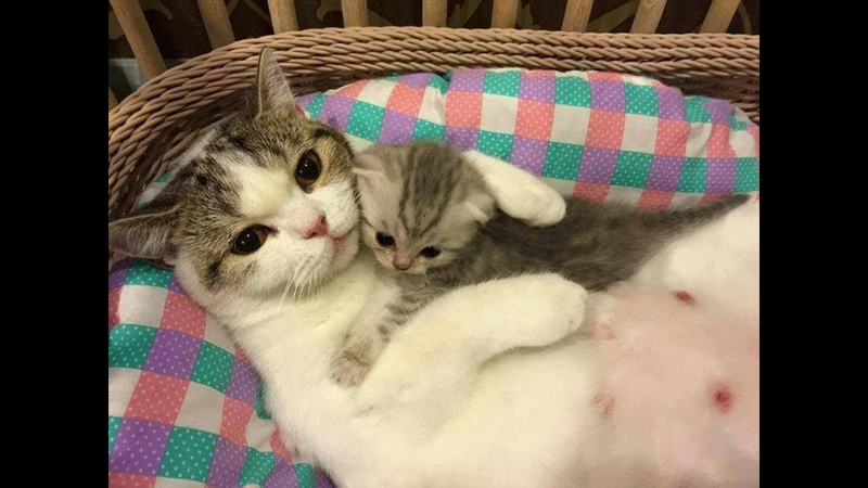 Mother Cat and Cute Kittens Videos Compilation | So CuTe