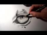 Как нарисовать глаз Тигра простым карандашом