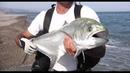 La pesca a Spinning: Canne Blue Romance Jerkbait e Jerkbait STC Shimano