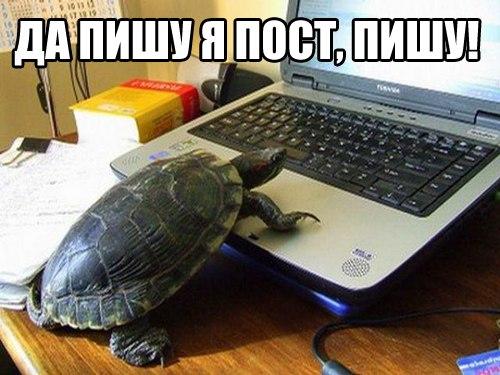 http://cs312616.vk.me/v312616620/51c2/NEGdoDzt2Os.jpg