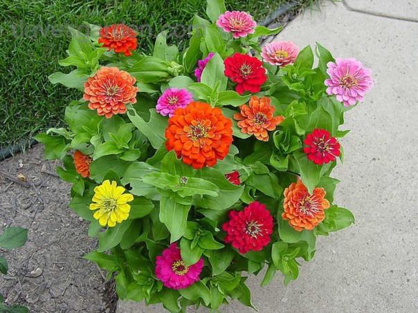 с такими подкормками ваши цветы будут расти, как на дрожжах! оказывается, цветы могут расти как на дрожжах и для этого всего навсего вам следует сделать подкормки для них. а вот как их делать,