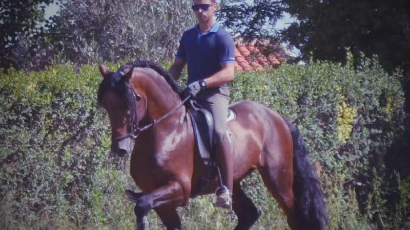 Возможно Вы интересуетесь приобретением испанской лошади не выезжая из Вашего города