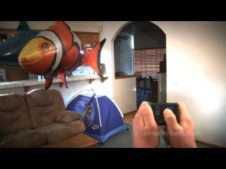 Летающие рыбы шары с гелием. Эти чудо-рыбы парят в воздухе и управляются с помощью пульта дистанционного управления.