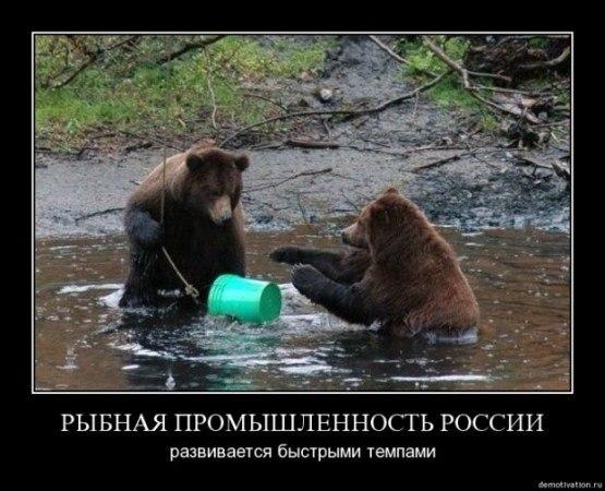 """""""Путин есть - еды не надо. Лжепатриоты, жгите свои машины!"""", - акция протеста в центре Москвы против запрета импортных продуктов - Цензор.НЕТ 3652"""