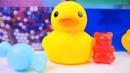 Bebek videosu. Sarı ördek yem arıyor.