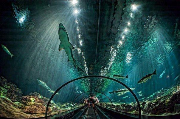 Стеклянный тоннель сквозь аквариум с акулами во Флориде, США
